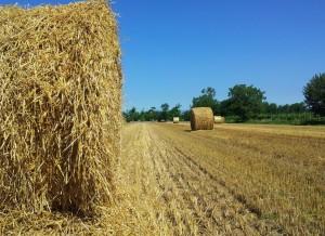 Vita di campagna fabio biscaro for Disegni di cabina di campagna